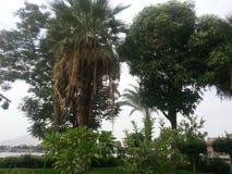 Тропические деревья в курорте Стоковая Фотография