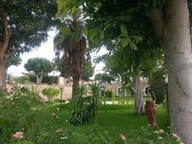 Тропические деревья в курорте Стоковые Изображения RF