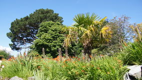 Тропические деревья в саде Bodnant Стоковые Фотографии RF