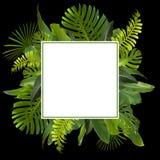 Тропические джунгли выходят предпосылка Стоковое Изображение