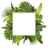 Тропические джунгли выходят предпосылка Стоковые Фото
