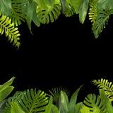 Тропические джунгли выходят предпосылка Стоковое Фото