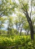 Тропические джунгли на банках священного озера Стоковое фото RF