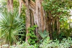 Тропические джунгли с зелеными листьями в мексиканськом тропическом лесе Стоковая Фотография
