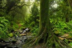 Тропические джунгли с рекой Стоковая Фотография