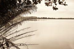Тропические заболоченные места Стоковое Фото