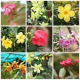 Тропические заводы и цветки Стоковое Изображение RF