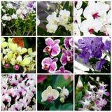 Тропические заводы и цветки Стоковая Фотография RF