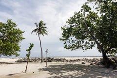 Тропические заводы острова Стоковые Изображения