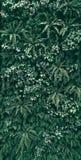 Тропические зеленые лист в темном тоне стоковое фото rf