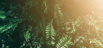 Тропические зеленые лист в темном тоне стоковые изображения rf