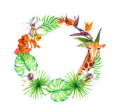 Тропические листья, экзотическое животное жирафа, орхидея цветут Рамка венка акварель Стоковые Изображения