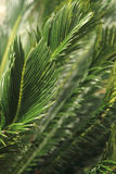 Тропические лист дерева тропического леса Стоковая Фотография RF