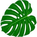 Тропические лист monstera бесплатная иллюстрация