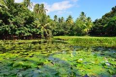 Тропические лилии на острове озера большом Гаваи стоковые фото