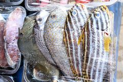 Тропические красочные рыбы для продажи в рынке Стоковое Изображение