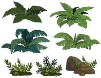 Тропические кусты иллюстрация штока