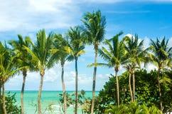 Тропические ладони Miami Beach около океана Стоковые Фото