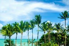 Тропические ладони Miami Beach около океана Стоковые Фотографии RF