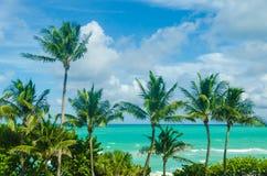 Тропические ладони Miami Beach около океана Стоковые Изображения RF