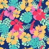 Тропические листья и гибискусы цветков цветут backgr лета Гавайских островов Стоковая Фотография