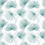 Тропические листья, картина джунглей Безшовная, детальная, ботаническая картина Предпосылка вектора Листья ладони Стоковая Фотография RF