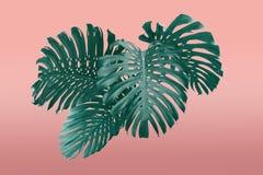 Тропические листья обрамляют стиль duotone в красном цвете и бирюзу с открытым космосом для вашего текста стоковое изображение rf