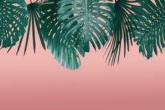 Тропические листья обрамляют стиль duotone в красном цвете и бирюзу с открытым космосом для вашего текста стоковые фото