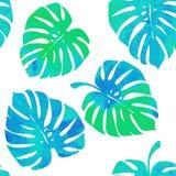 Тропические листья, monstera на белой предпосылке Стоковое фото RF