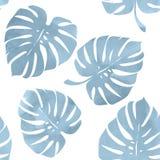 Тропические листья, monstera на белой предпосылке Стоковое Изображение RF