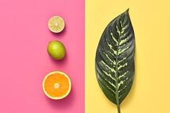 Тропические лист ладони, плодоовощи Яркий комплект лета vegan Стоковое Изображение