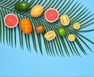 Тропические лист ладони, плодоовощи Яркий комплект лета vegan Стоковая Фотография RF