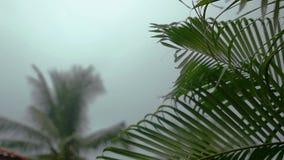 Тропические падения ветра и дождя понижаясь на зеленую пальму выходят в замедленное движение, 1920x1080 акции видеоматериалы