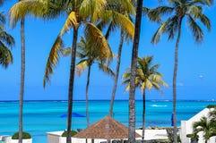 Тропические пальмы в Багамских островах Стоковое Изображение