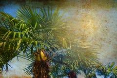 Тропические пальмы подсвеченные с лучем солнца Праздники перемещения лета отдыхают концепция Красочное фото в ретро винтажном сти стоковое фото rf
