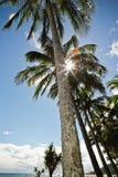 Тропические пальмы стоковое фото