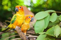 Тропические попыгаи стоковые изображения rf