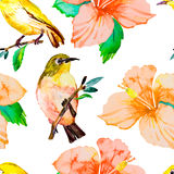 Тропические птицы и цветки гибискус Бело-глаза Стоковая Фотография RF