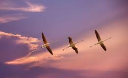 Тропические птицы над предпосылкой голубого неба Стоковые Изображения RF