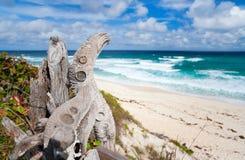 Тропические пляж и море стоковые фотографии rf