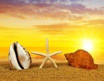Тропические раковины моря с морскими звёздами на песчаном пляже Стоковые Фото