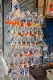 Тропические рыбы аквариума и plat на рынке рыбки Гонконга Стоковая Фотография
