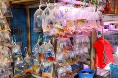 Тропические рыбы аквариума и plat на рынке рыбки Гонконга Стоковая Фотография RF