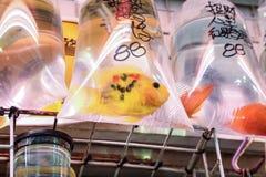 Тропические рыбы аквариума и plat на рынке рыбки Гонконга Стоковое фото RF