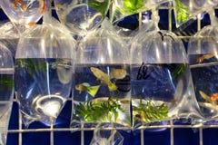 Тропические рыбы аквариума и plat на рынке рыбки Гонконга Стоковые Изображения