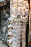 Тропические рыбы аквариума и plat на рынке рыбки Гонконга Стоковое Фото