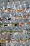 Тропические рыбы аквариума и plat на рынке рыбки Гонконга Стоковые Фото