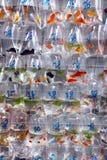 Тропические рыбы аквариума и plat на рынке рыбки Гонконга Стоковые Изображения RF