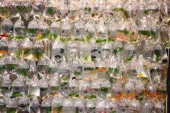Тропические рыбы аквариума и plat на рынке рыбки Гонконга Стоковые Фотографии RF