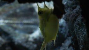 Тропические рыбы в аквариуме Близкий взгляд тропических рыб в аквариуме акции видеоматериалы